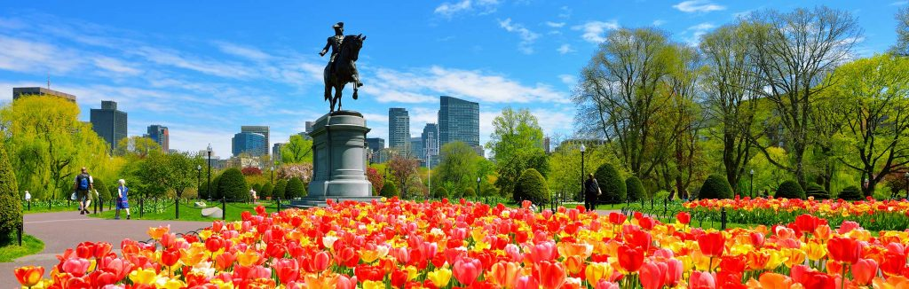 Boston public garden filled with yellow, orange, and red tulips with a statue of George Washington riding a horse and the city in the background