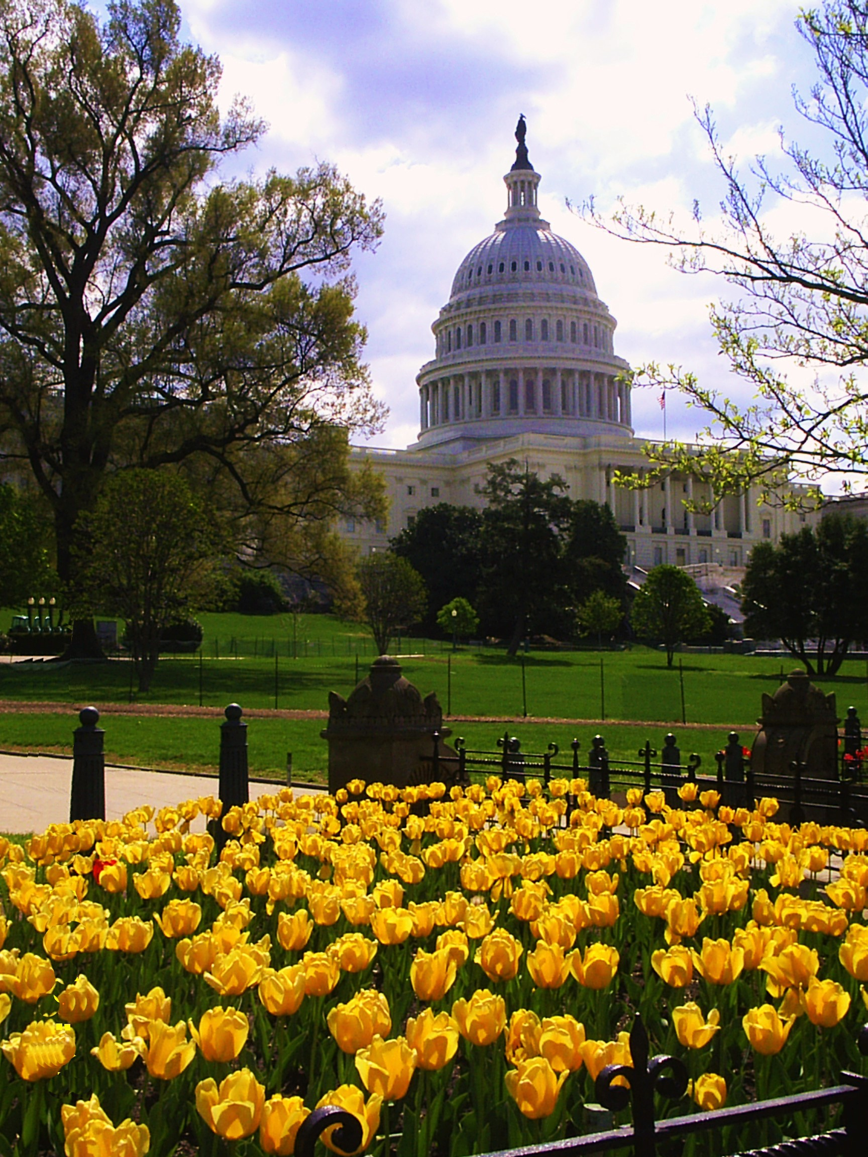 flowers in front of Capitol Hill in Washington DC