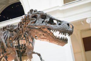 T-Rex Sue in Chicago