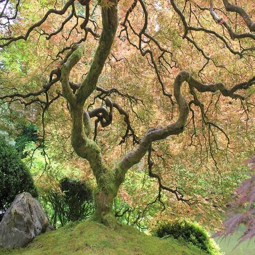 japanese tree garden