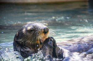 otter aquarium
