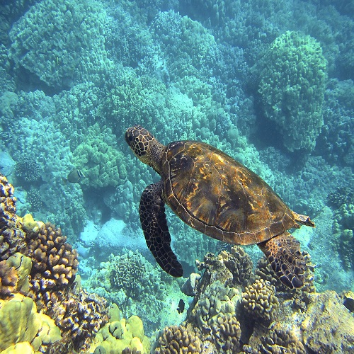 see the marine life in Hawaii on your performance tour